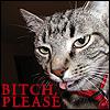 cat - bitch please