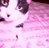 vicious_rose userpic