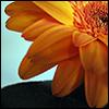 framed_hope userpic