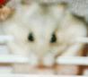 hammy_boys userpic