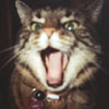 velvetboo userpic