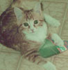 glowcat