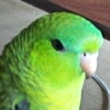 littlegreenbird userpic