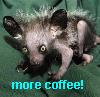 coffee aye-aye