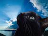 walkingcat userpic