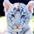 tigrusja userpic