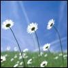 myrtille userpic