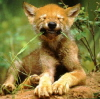 bigevilwolf userpic