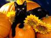 _yellow_cat userpic