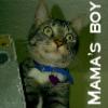 mamasboy