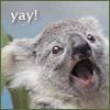Killa: koala yay
