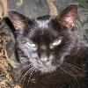 artemis_kitty userpic