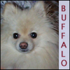buffalo77