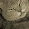 Rocky the cat