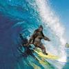 surfing bigfoot