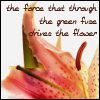 Laura: flower