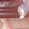 dabrwneyedgurl userpic