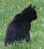 Немного кошек в холодной листве