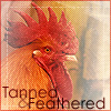 tanned_featherd userpic
