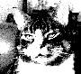 luneroun userpic