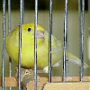 the_red_canary userpic