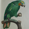 parrot_knight userpic