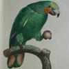 parrot_knight