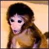 baby_gigi userpic