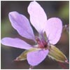 utahwildflowers userpic