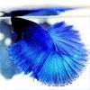 blackfluffymilk userpic