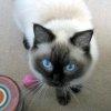 azrael_the_cat userpic