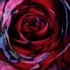 miss_meg userpic