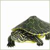 Mrs. Christie: turtle