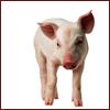 Mrs. Christie: piglet