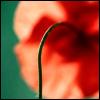 bethlehem2 userpic