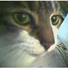 aitchellsee: Catseye