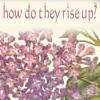 lilac 25th may