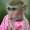 pretty monkey