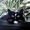 cat black pot