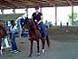 dressageparana userpic