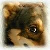 funny_sunny userpic