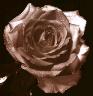 m014 userpic