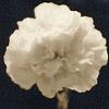 whitecarnation userpic