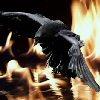 ravynnfyr userpic