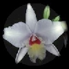chloevontamia userpic