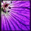 lutrinaeenhydra userpic