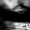 alvefard userpic