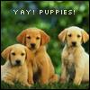 yay puppies!