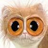 Rose: Big eyes
