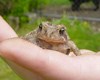 toad in hand